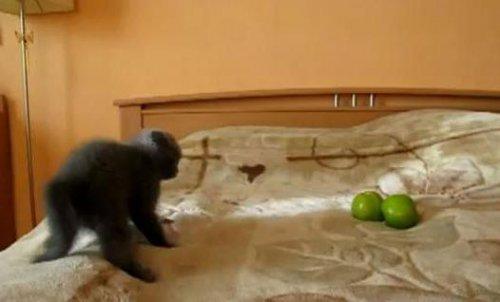 """Котёнок против двух """"страшилок"""""""