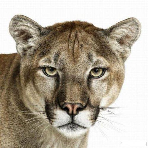 Красивые портреты животных (38 фото)