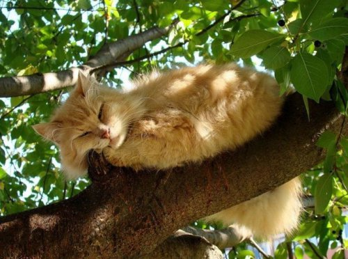 Кошки среди деревьев (15 фото)