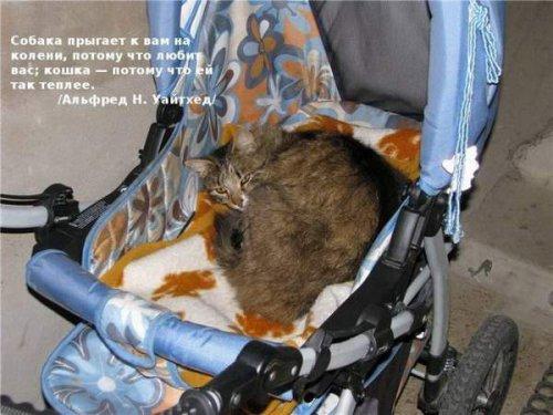 Цитаты знаменитостей о кошках (21 фото)