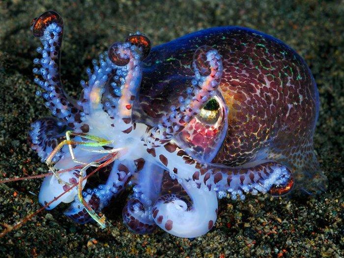 морские обитатели фото с названиями и описанием талантливого