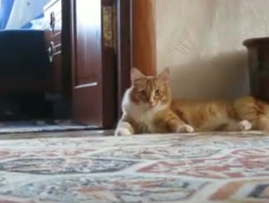 Кот ушёл