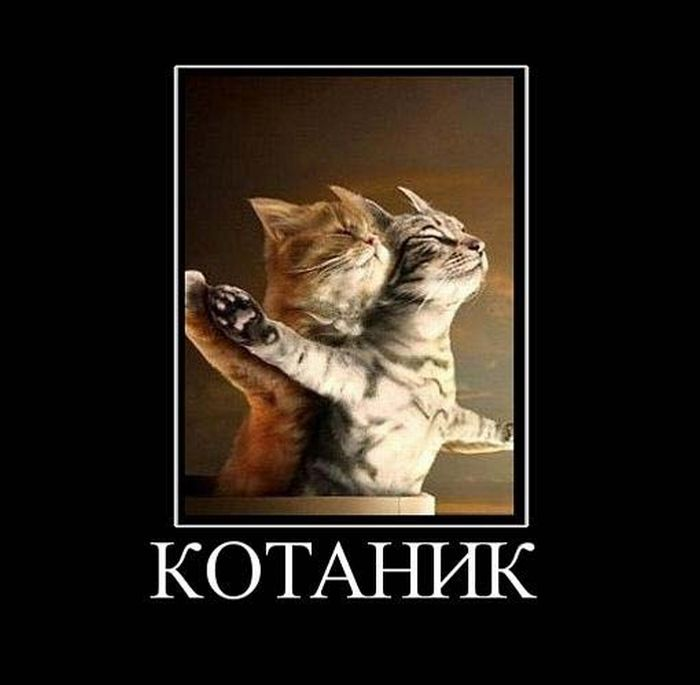 Summary -> Funny Romantic Cat Poster You Jump I Jump Design Love