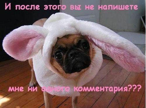 Собака-лайф (23 фото)