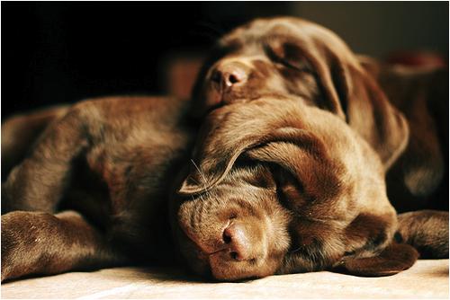 На позитиве.Собаки! (18 фото)