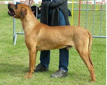 5 запрещенных пород собак (6 фото)