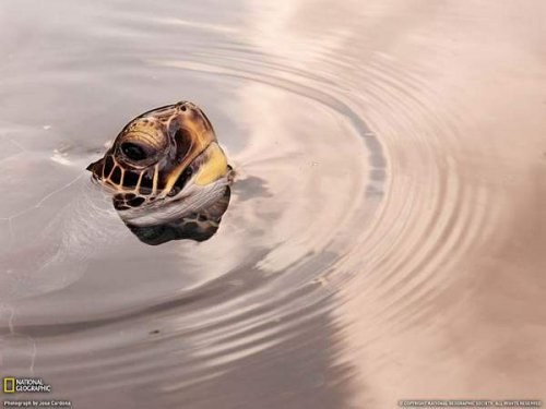 Лучшие фотографии июля от National Geographic (23 фото)