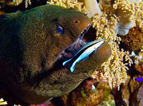 Красивые морские фотографии (30 фото)
