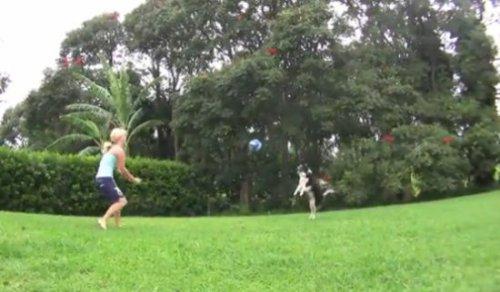 Собачий волейбол