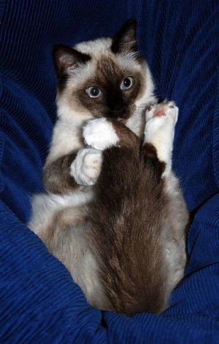 На позитиве.Кошки! (25 фото)