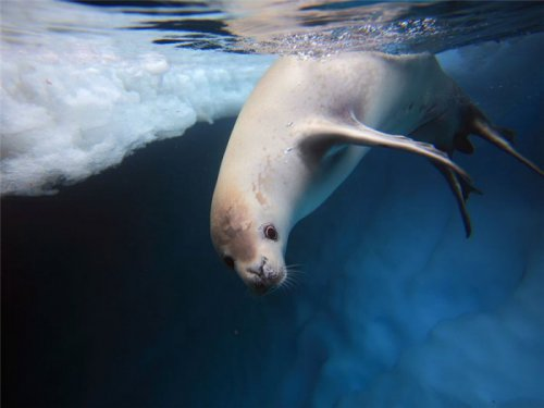 Животные под водой и над водой (23 фото)