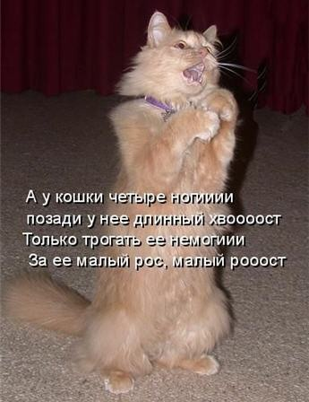 Кошачьи шутки (33 фото)