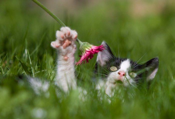 Кошки → кошки среди цветов 36 фото