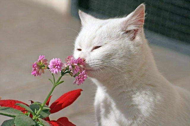 строке поиска запах курева для кота для бизнеса