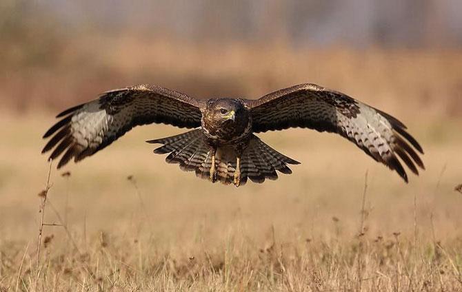 Птицы → птицы в полёте 25 фото
