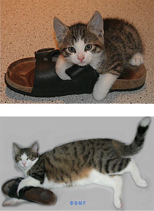 Прикольная подборка о взрослении котят (15 фото)