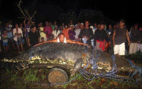 Огромный крокодил (4 фото)