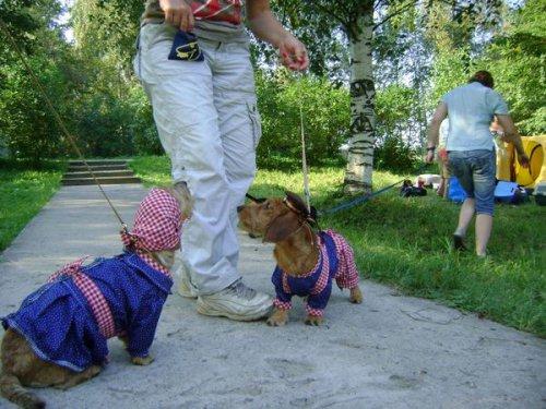 В позитиве дня: Собаки (30 фото)