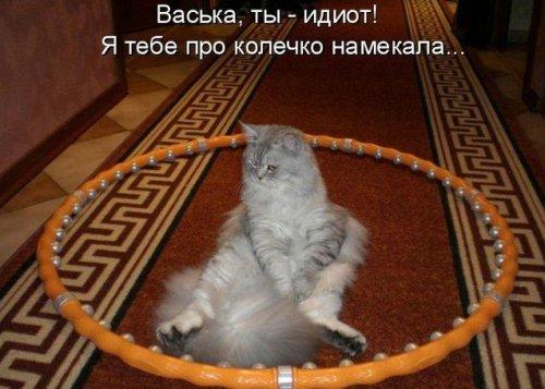 Забавная котоматрица (33 фото)