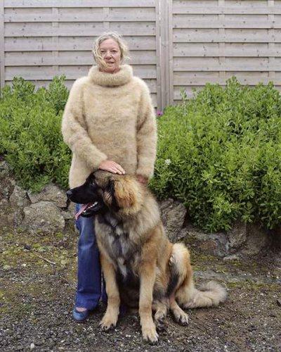 Собачий холод (9 фото)