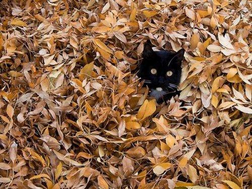 Осенние котики (21 фото)