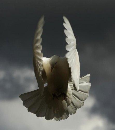 Птицы в полёте (25 фото)