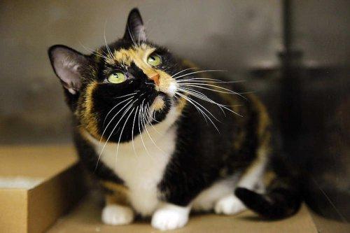 Кошка-путешественница за 5 лет добралась из Колорадо в Нью-Йорк (12 фото)
