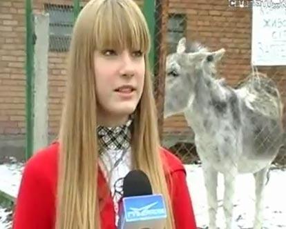 Неприличный ослик:)