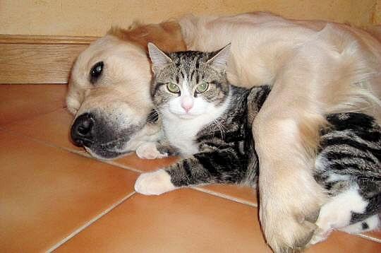 Своим, картинки прикольные с надписями с кошками и собаками