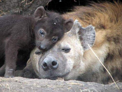 Мать и дитя в мире животных (24 фото)