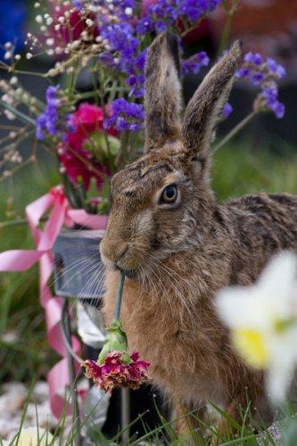 Лучшие фотографии дикой природы 2011 года (33 фото)