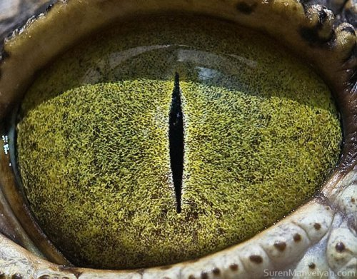 Глаза животных крупным планом (14 фото)