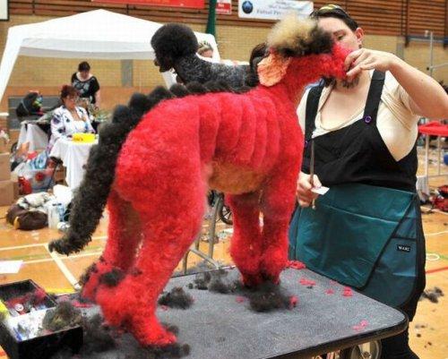 Шоу-показ собачьих стрижек (8 фото)