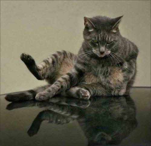 Научимся понимать кошек (22 фото)