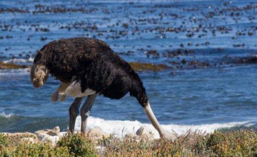 Заблуждения о животных. (11 фото)