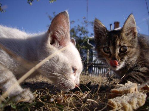 Коты,кошки,котята (45 фото)
