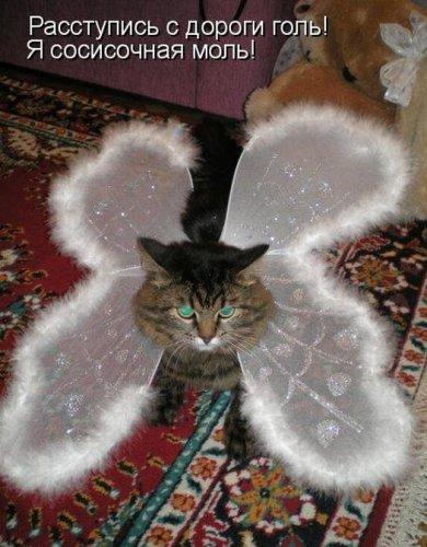 Забавная котоматрица (40 фото)