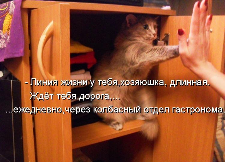 Смешные фото кошек с подписями новые очень смешные, февраля