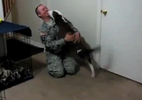Трогательное видео: псы встречают хозяев из армии