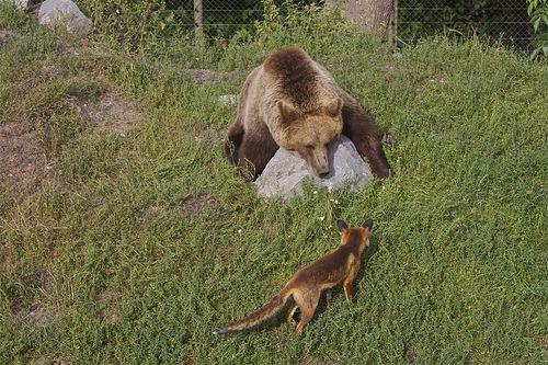 Медведь и лиса прикольные картинки, сделать