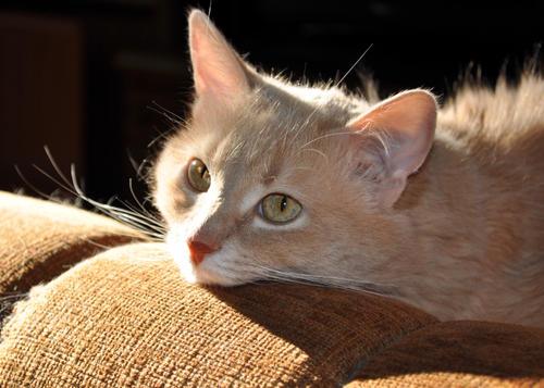 Как правильно наказывать кота?