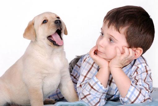 Собаки способны защищать малышей от астмы
