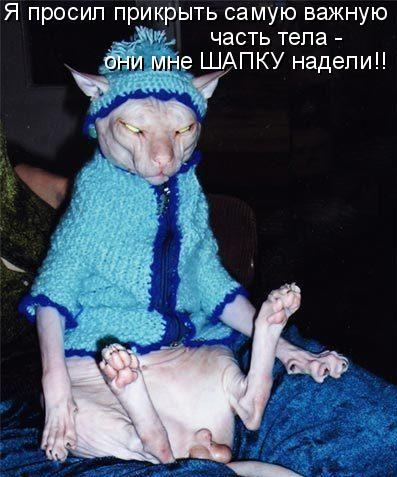 Кошачья котоматрица (25 фото)