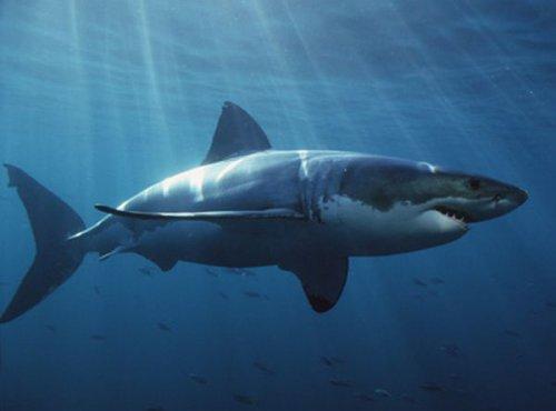 10 существ,которых мы боимся больше всего (10 фото)