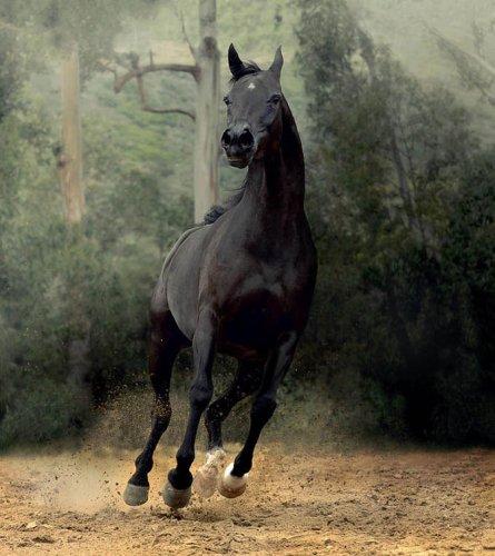 Красивейшие лошади от Войтека Квятковски (20 фото)
