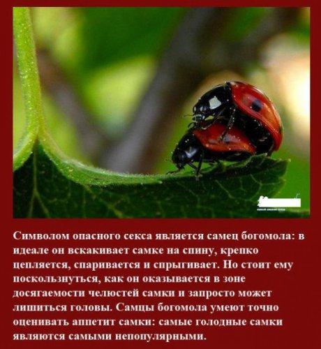 Секс среди насекомых и не только (10 фото)