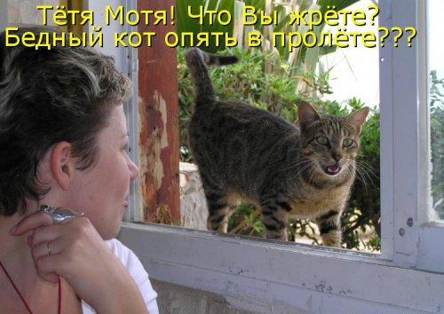Котошутки (30 фото)