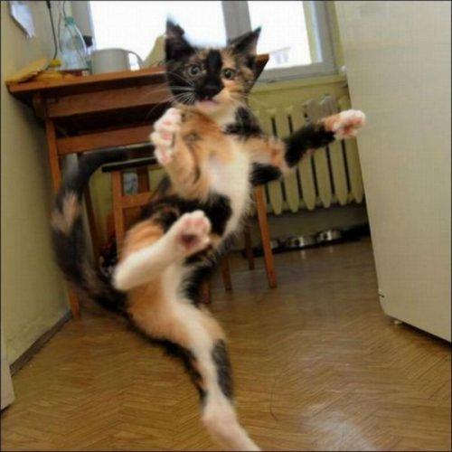 Коты хулиганят (31 фото)