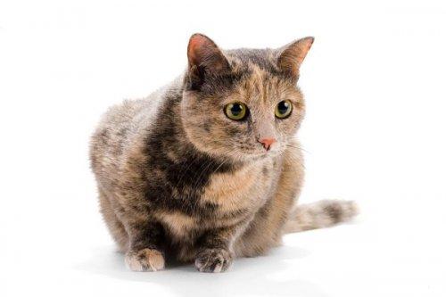 Кошки. Опасности дома.