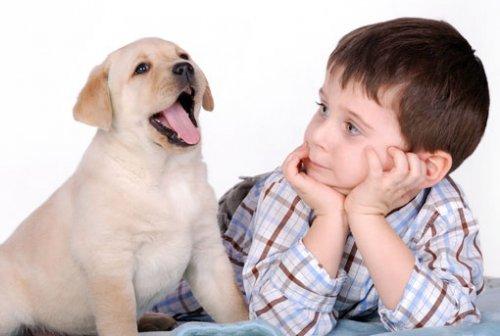 Как стоит подходить к выбору собаки